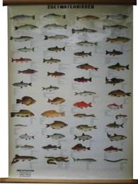 Serie - [Vissen]